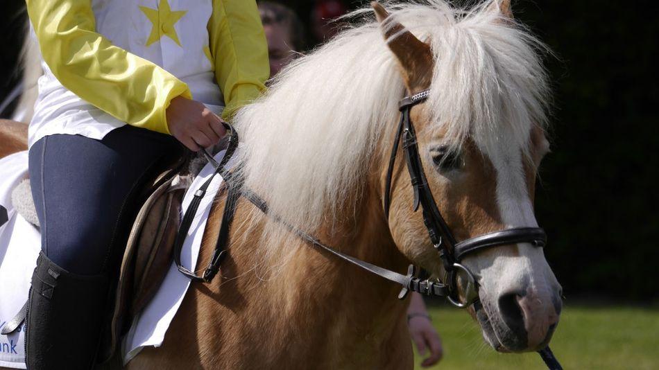 Horse Riding Hannover Pferderennbahn Auf Der Bult Horse Haflinger EyeEm Best Shots