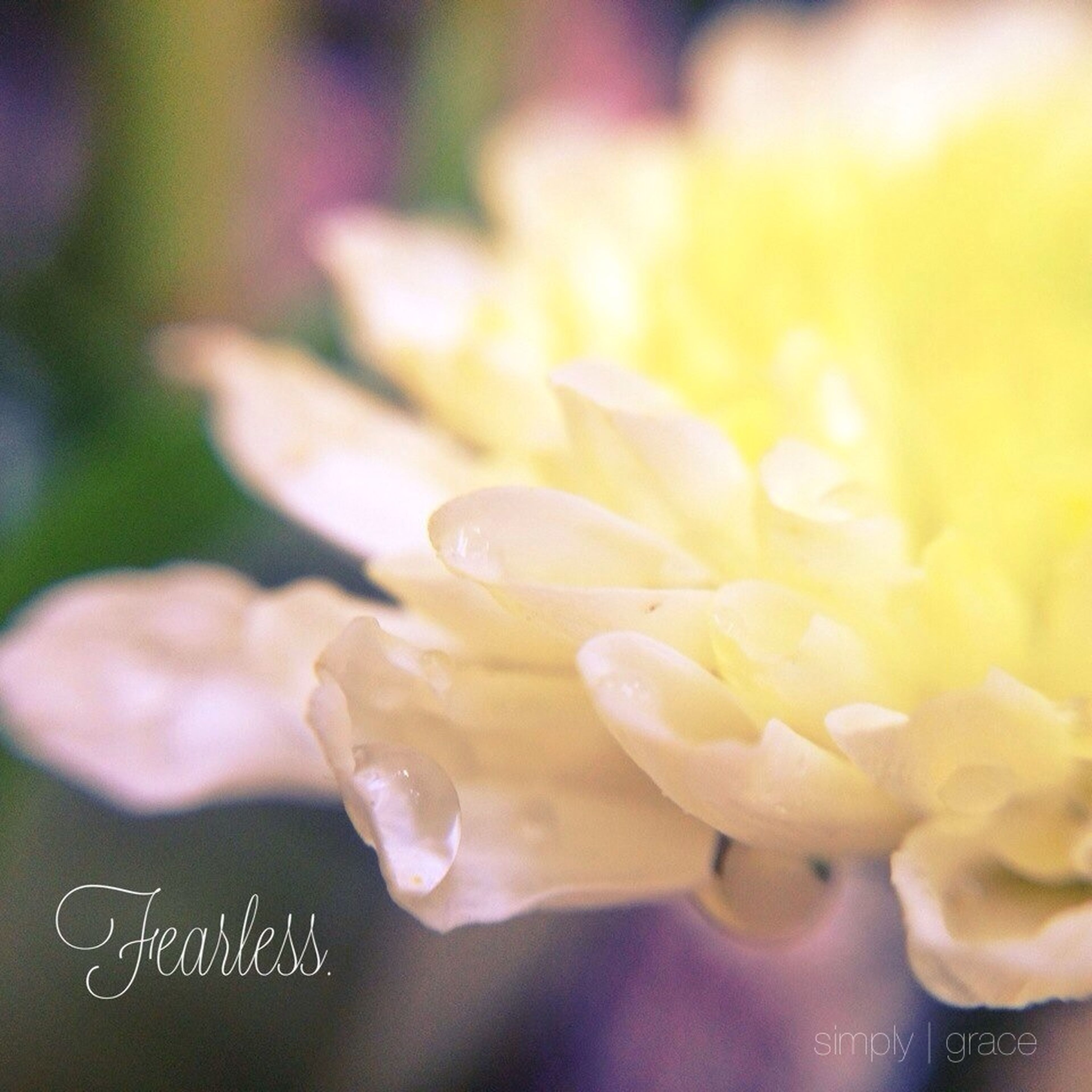 freshness, close-up, water, flower, petal, drop, fragility, wet, focus on foreground, beauty in nature, selective focus, flower head, nature, no people, growth, white color, day, ice, outdoors, detail