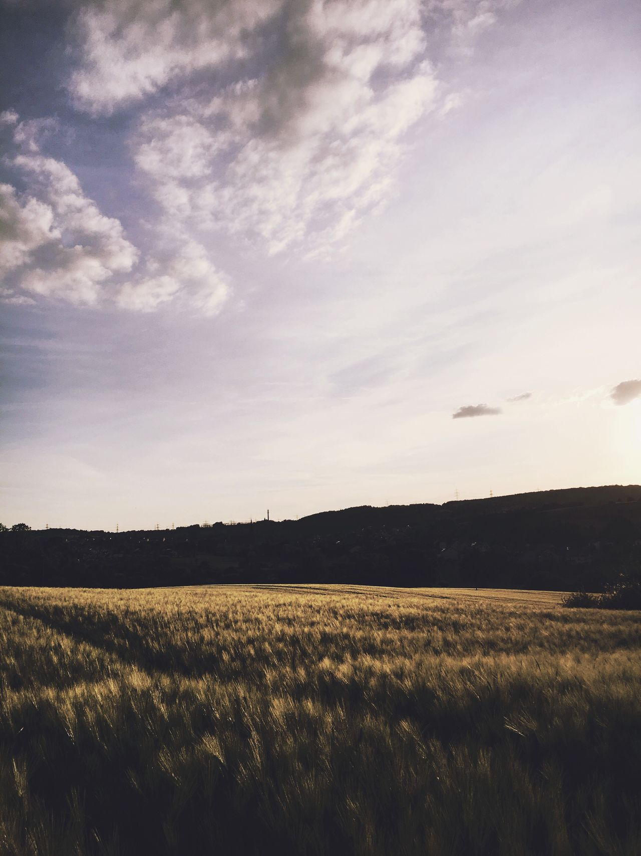 Field Landscape Agriculture Nature Sky Tranquil Scene Rural Scene Scenics No People Beauty In Nature Tranquility Growth Outdoors Grass Day Sunset Sunset_collection Cereal Plant