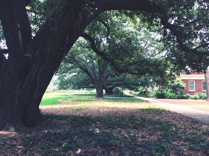 EyeEmNewHere Tree Trees Mystical Mystic Wimsical Nature EyeEm Selects