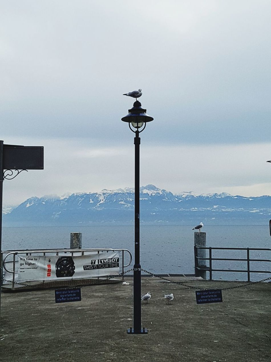A lonely sea gull Cloud - Sky No People Nature Outdoors Beauty In Nature Lake Morges Switzerland Morning Peaceful View Family Trip Eyeemphotography Mountain Walking Along The Beach Of Lake