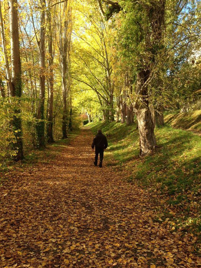 Nature_collection Autumn Colors Landscape_Collection