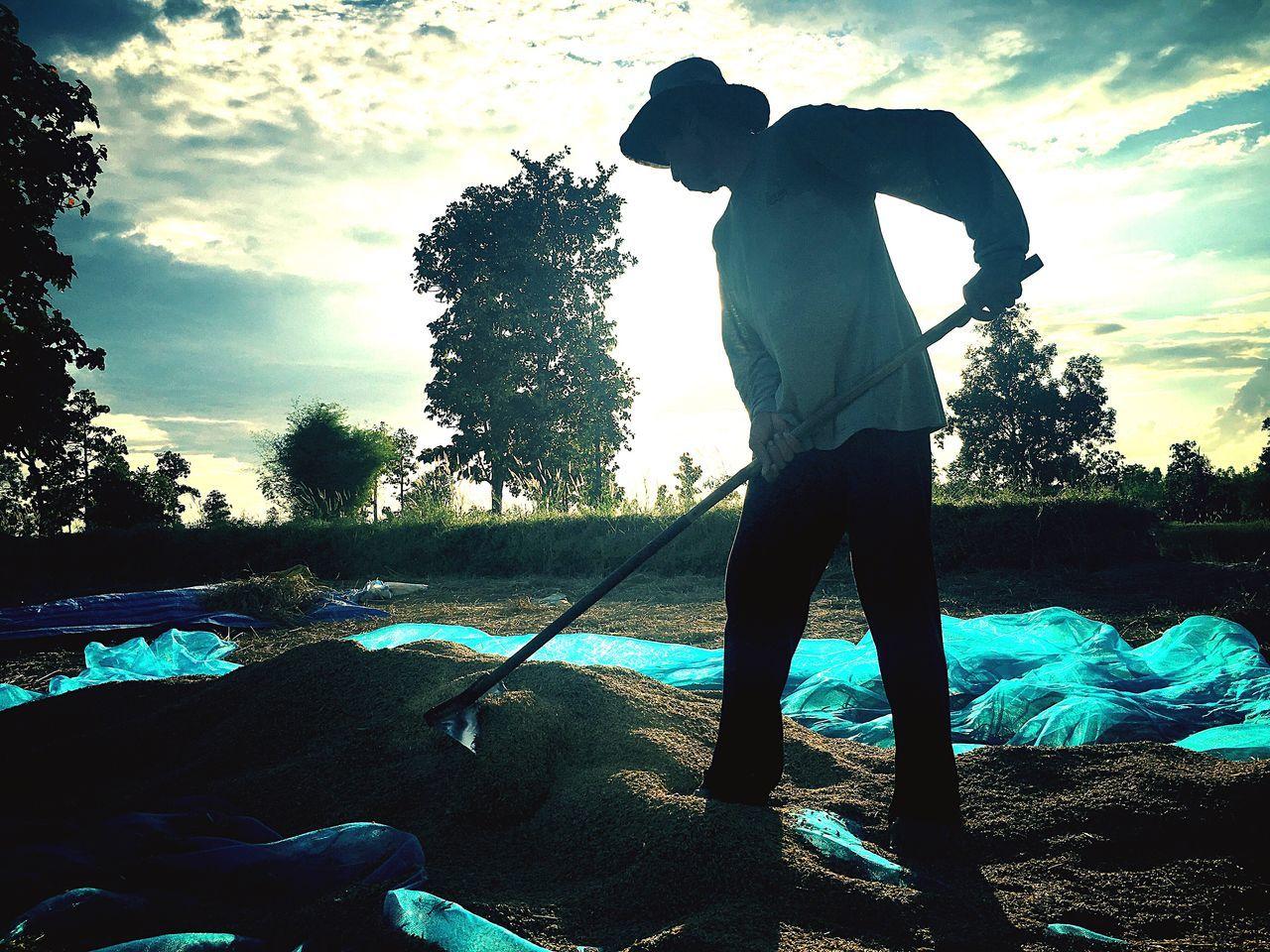 A farmer Sunlight ☀ Outdoors Silhouette Farmer Farmville Farmer's Life Working Hard Drying Paddy Rice Rice Paddy Thai Farmer