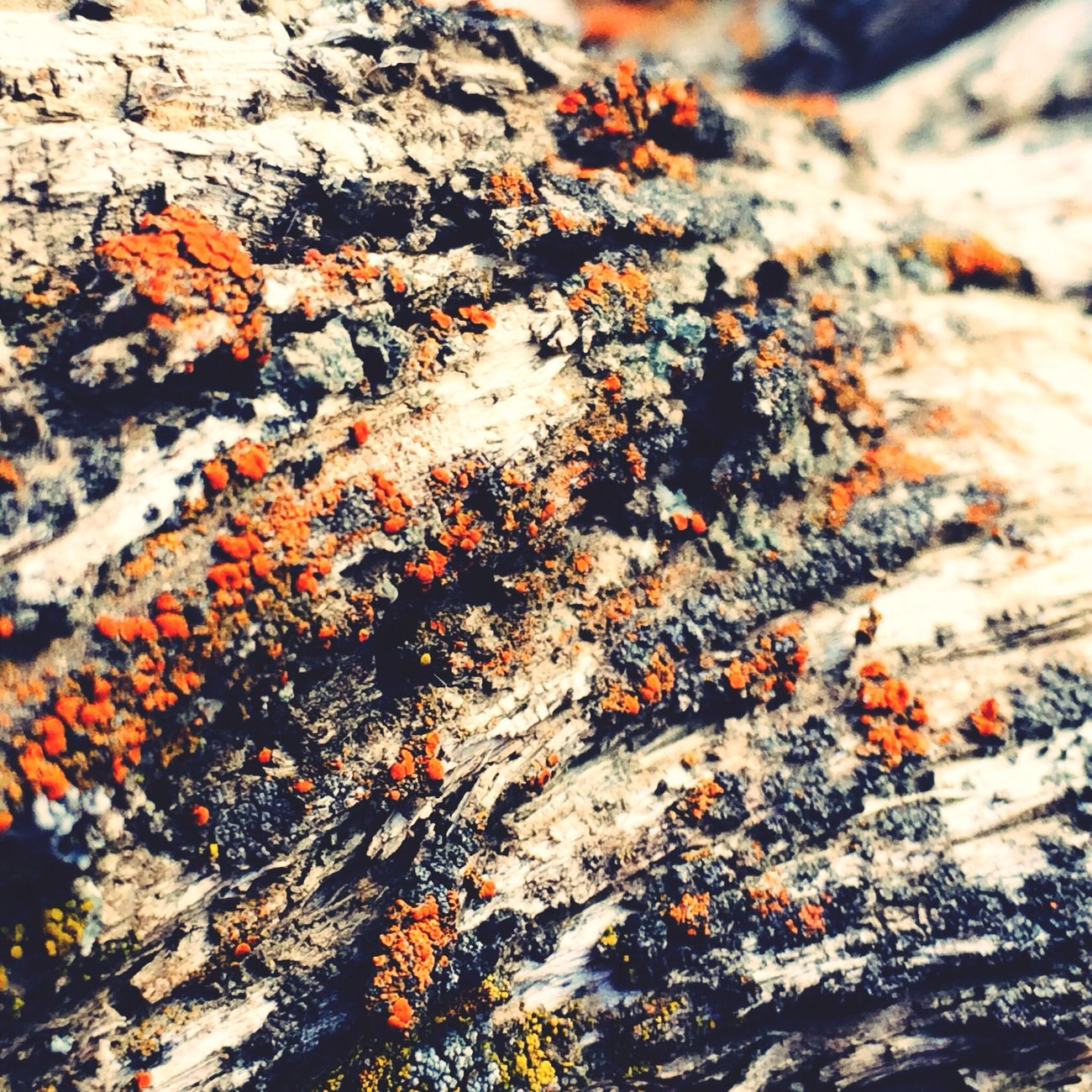 Moss weathered tree