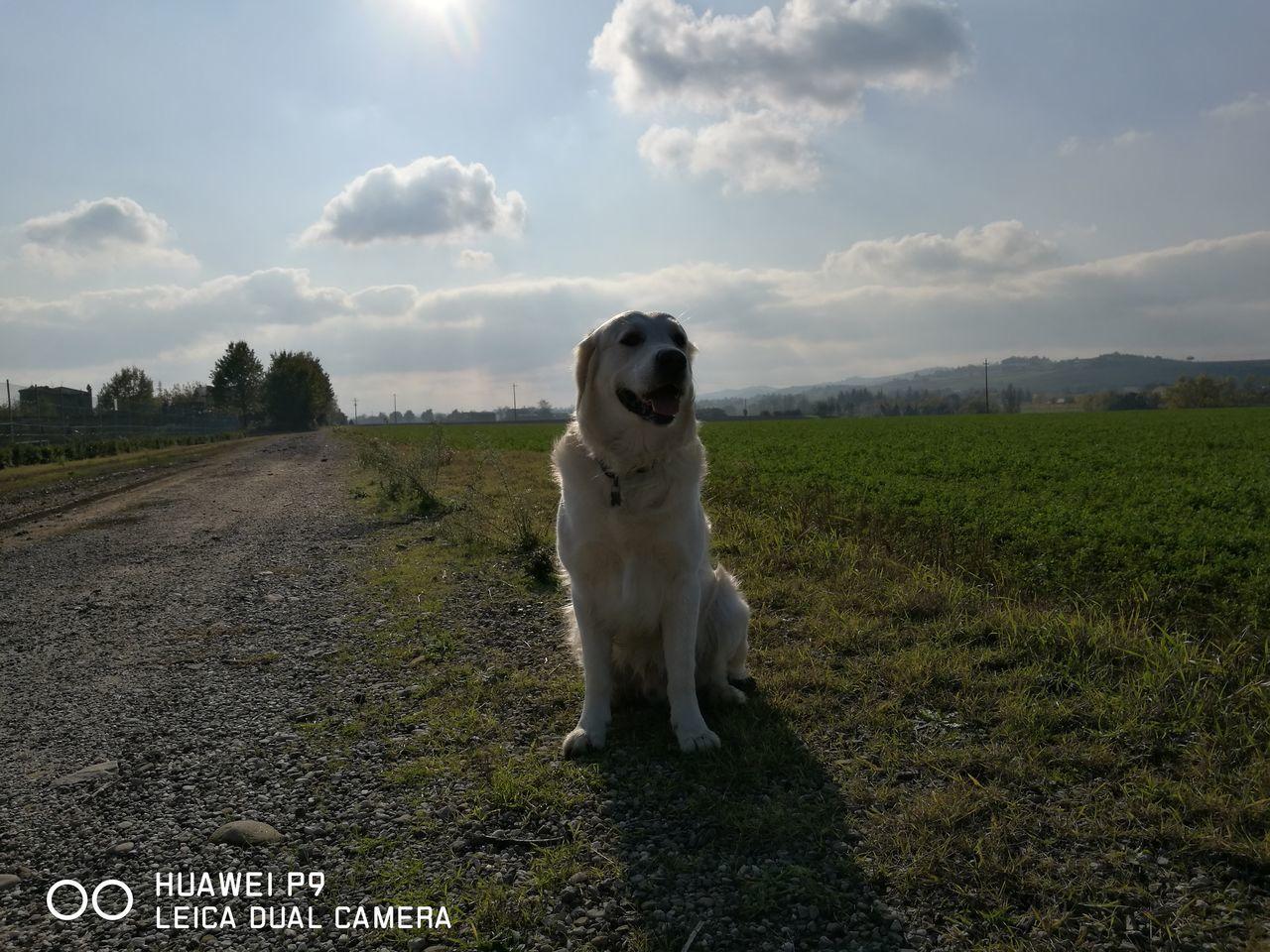 Dogslife Mygolden Sempreinsieme Sempreingiro Lavitaèbella