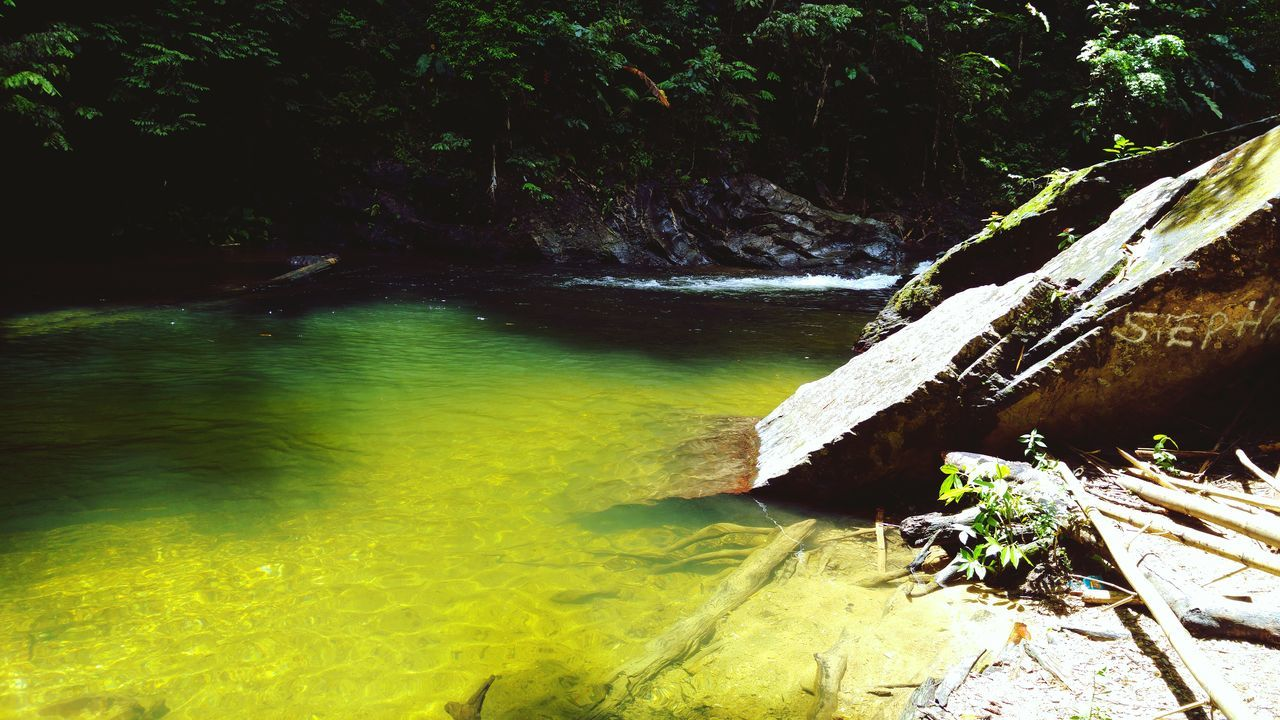 nature, water, no people, outdoors, tranquility, day, beauty in nature, tree, forest, growth, waterfall