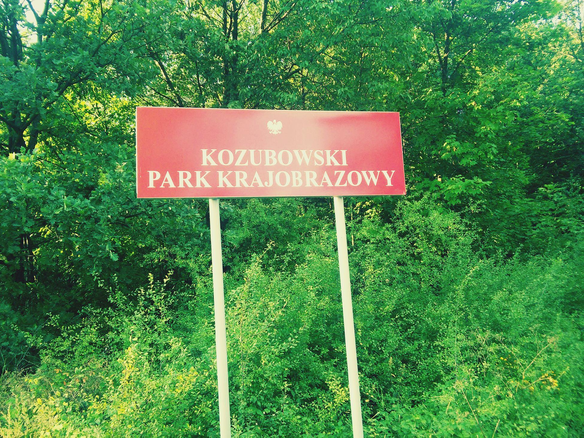 Wola Chroberska Nature Poland Forest Photography
