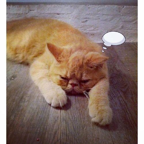 โป้ยยยย..Caturdaycatcafe