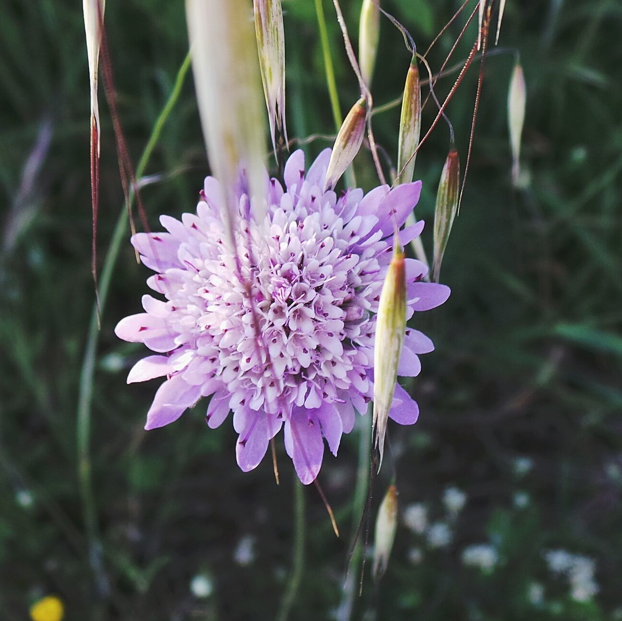 Flower Purple Nature Fragility Day Beauty In Nature No People Flower Head