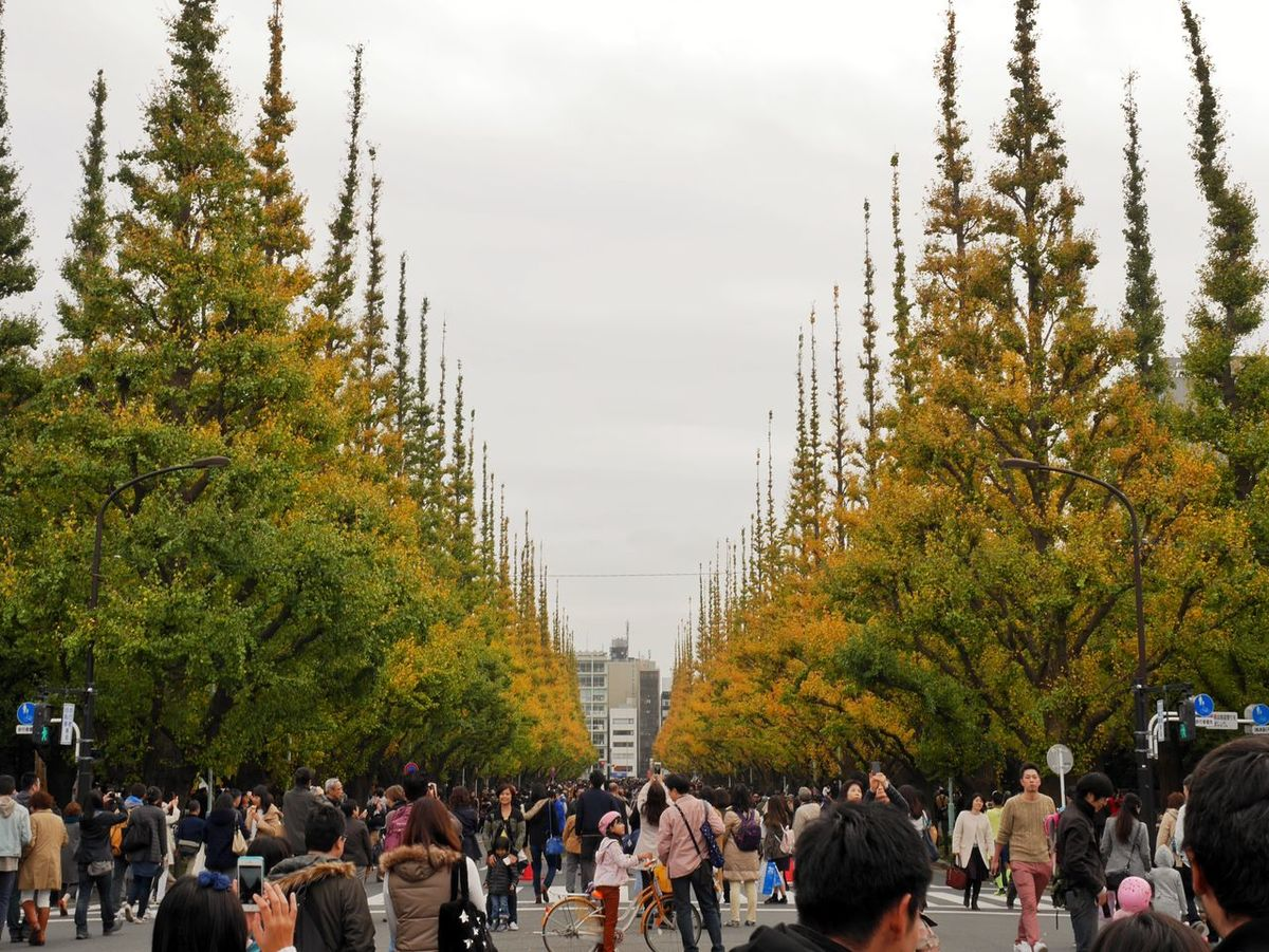 Still early/まだ早かった Autumn Leaves Autumn Colors Early Crowded Walking Around LUMIX DMC-GX7 Ginkgo