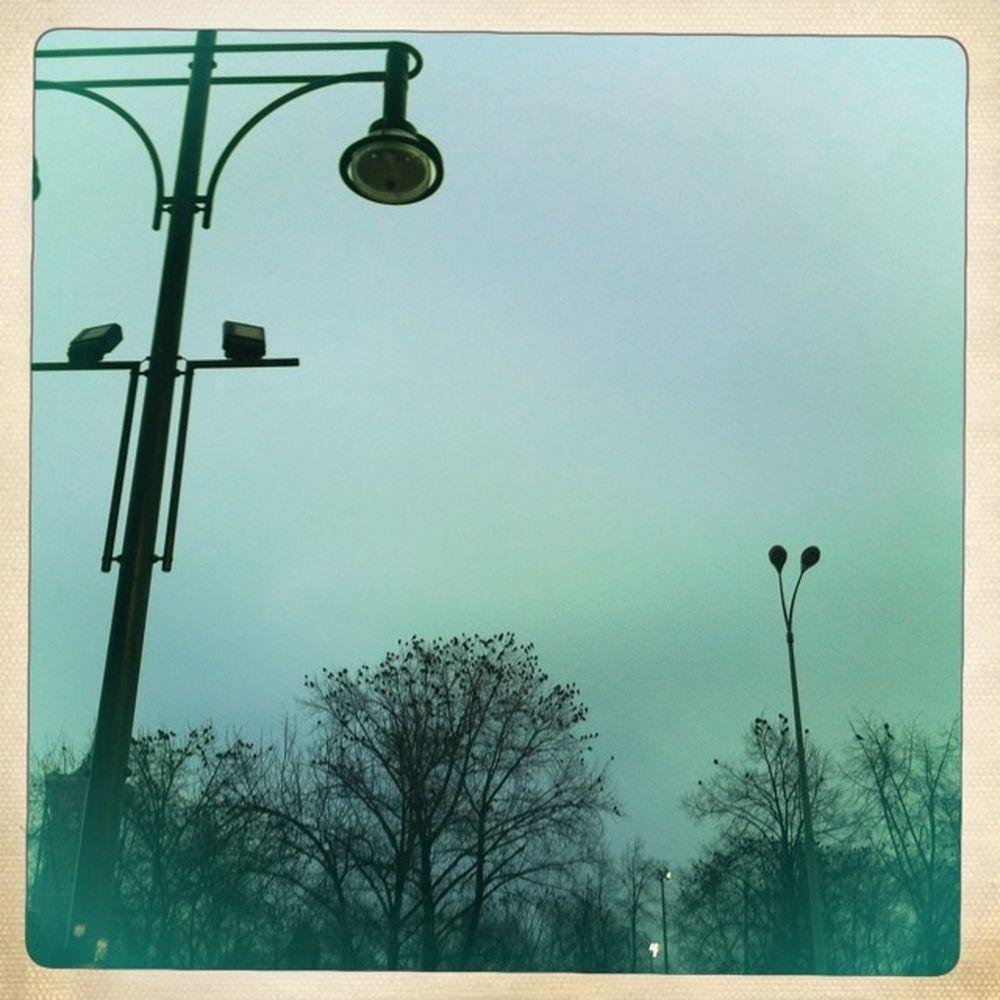 Berlin Birds Scary Birds