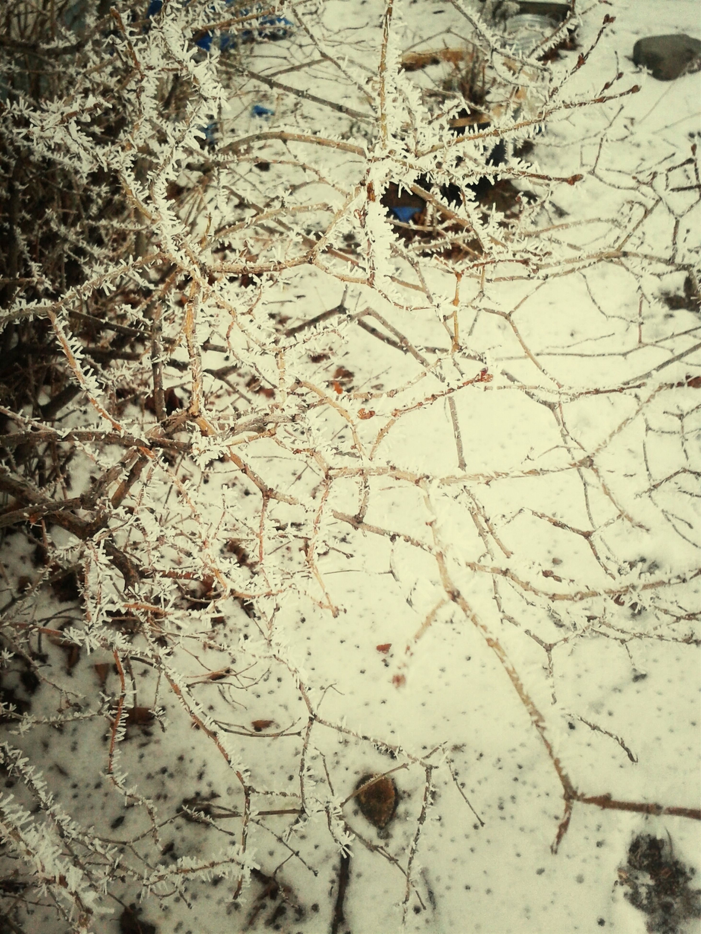 high angle view, full frame, nature, dry, day, backgrounds, outdoors, textured, no people, ground, pattern, sand, tree, leaf, animal themes, dirt, cracked, tranquility, messy, field
