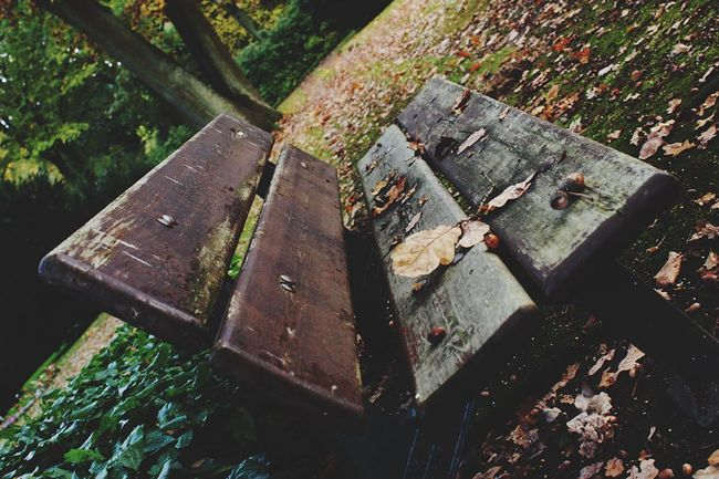 Hello World Hello Hamburg Colors Of Autumn No People Park Outdoors Close-up My Point Of View Have A Seat Fall Season Fall Fall Colors Taking Photos Click Click 📷📷📷 Enjoying Life... Eye For Details Outdoors Photography Bench Parkbench Hello Autumn Leafs 🍃 Germany🇩🇪