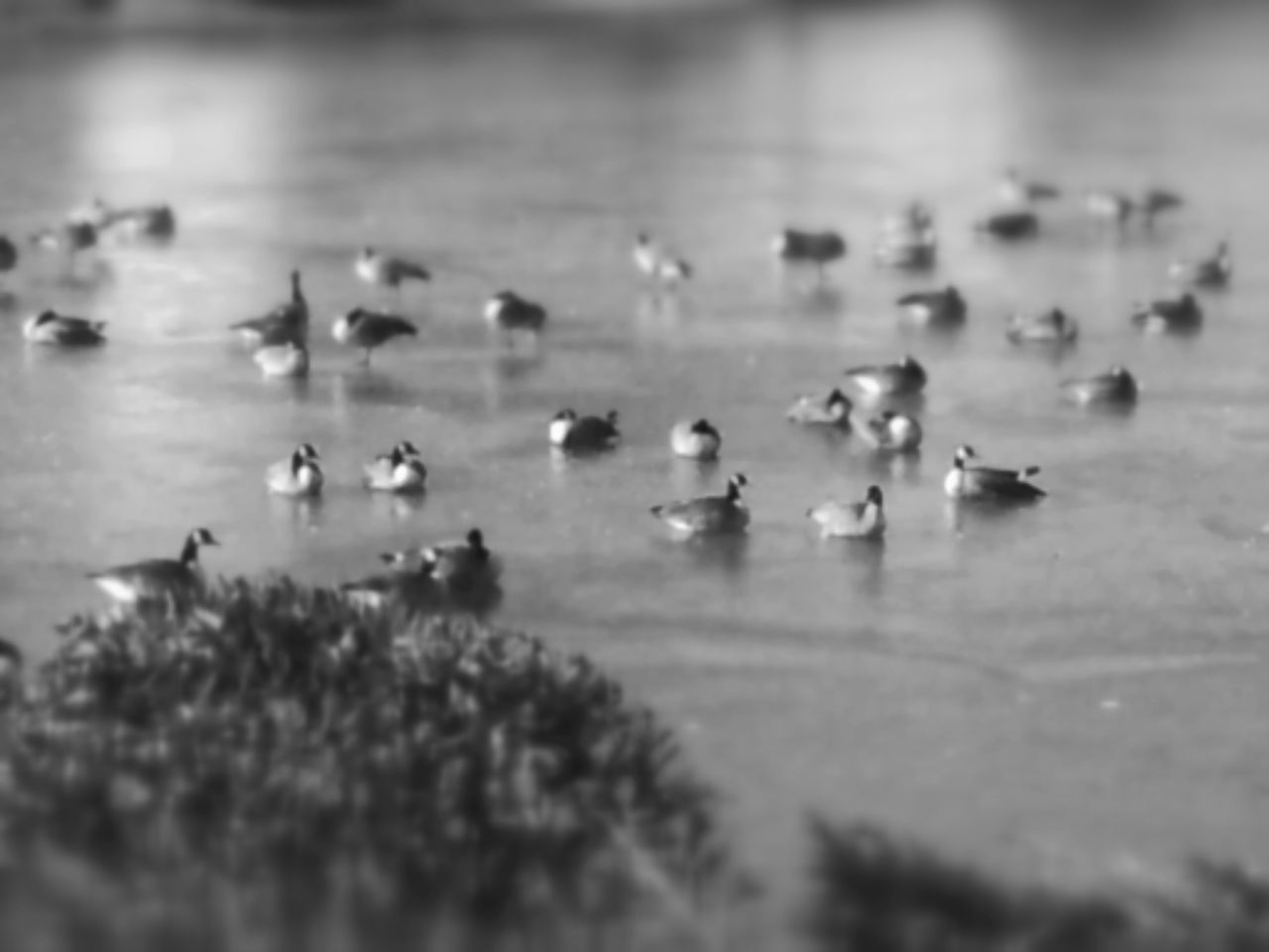selective focus, water, no people, nature, bird, large group of animals, animals in the wild, day, animal themes, outdoors, beauty in nature, sky