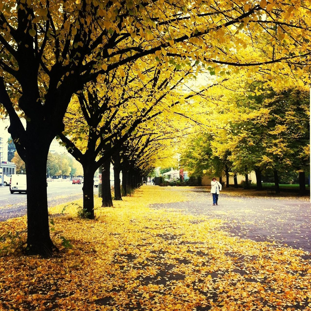 Woman Walking In Park By Street During Autumn