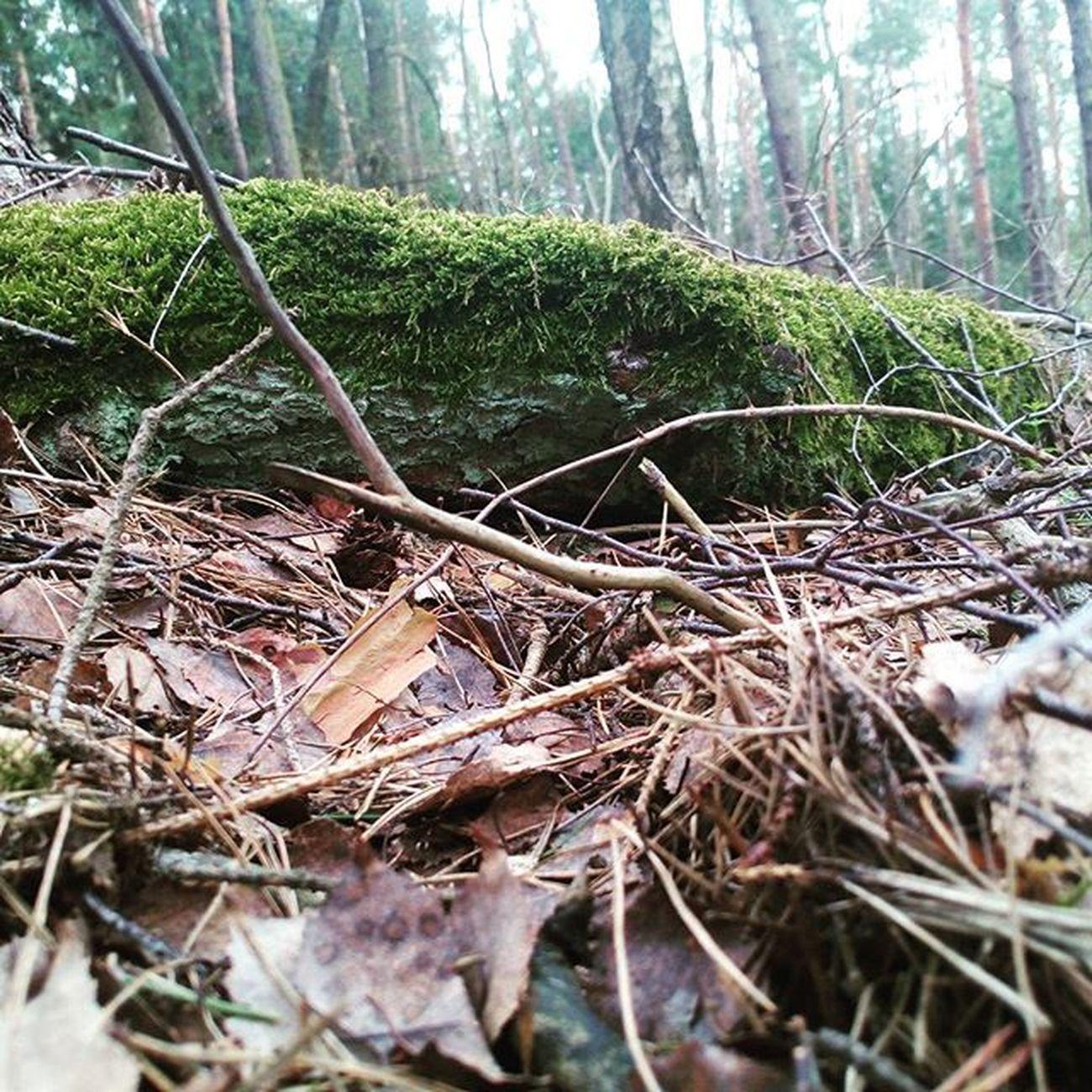 Juno Nice Fillter Beautiful Atforest Forest Rock Atdogwalk Dogwalk Withdog Prettynice Cool