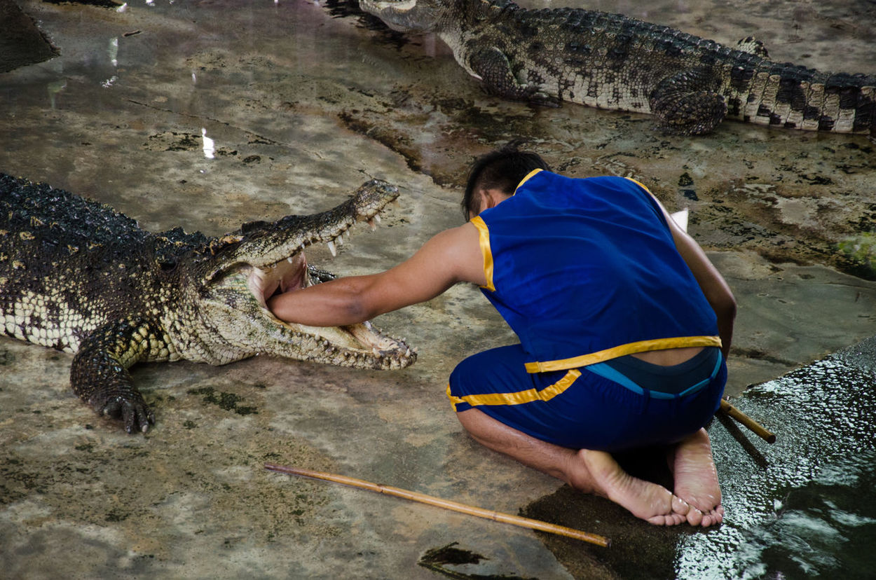 🐊 Crocodile Alligator Crocodiles Animals Zoo Zooanimals Architecture Traveling Travel Photography Vscothailand Thailand Thai Vscocam Thailandtravel Explore Thailand_allshots VSCO EyeEm Gallery EyeEmBestPics EyeEm Best Shots Instragram Photoanimal Crocodile Farm Crocodile Park