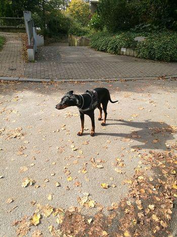 Lucyborkenhagen Dog Domestic Animals Animal Themes Pets Mammal Outdoors Day One Animal No People Nature