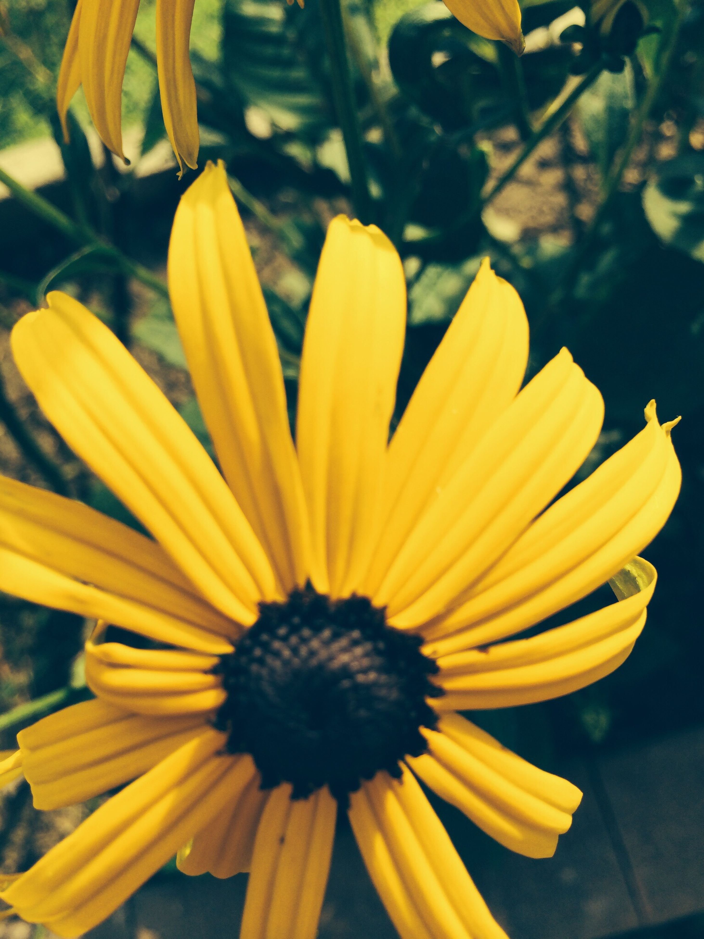 flower, yellow, petal, flower head, freshness, fragility, focus on foreground, close-up, beauty in nature, pollen, blooming, growth, nature, plant, in bloom, no people, outdoors, day, vibrant color, single flower