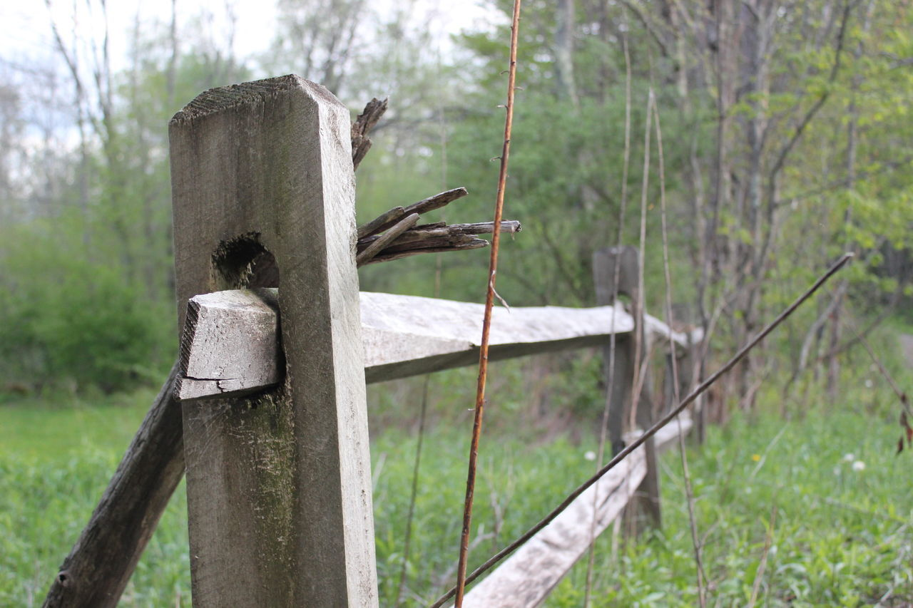 A fence. Dry Focus On Foreground Green Green Color Leaf No People Twig Wood