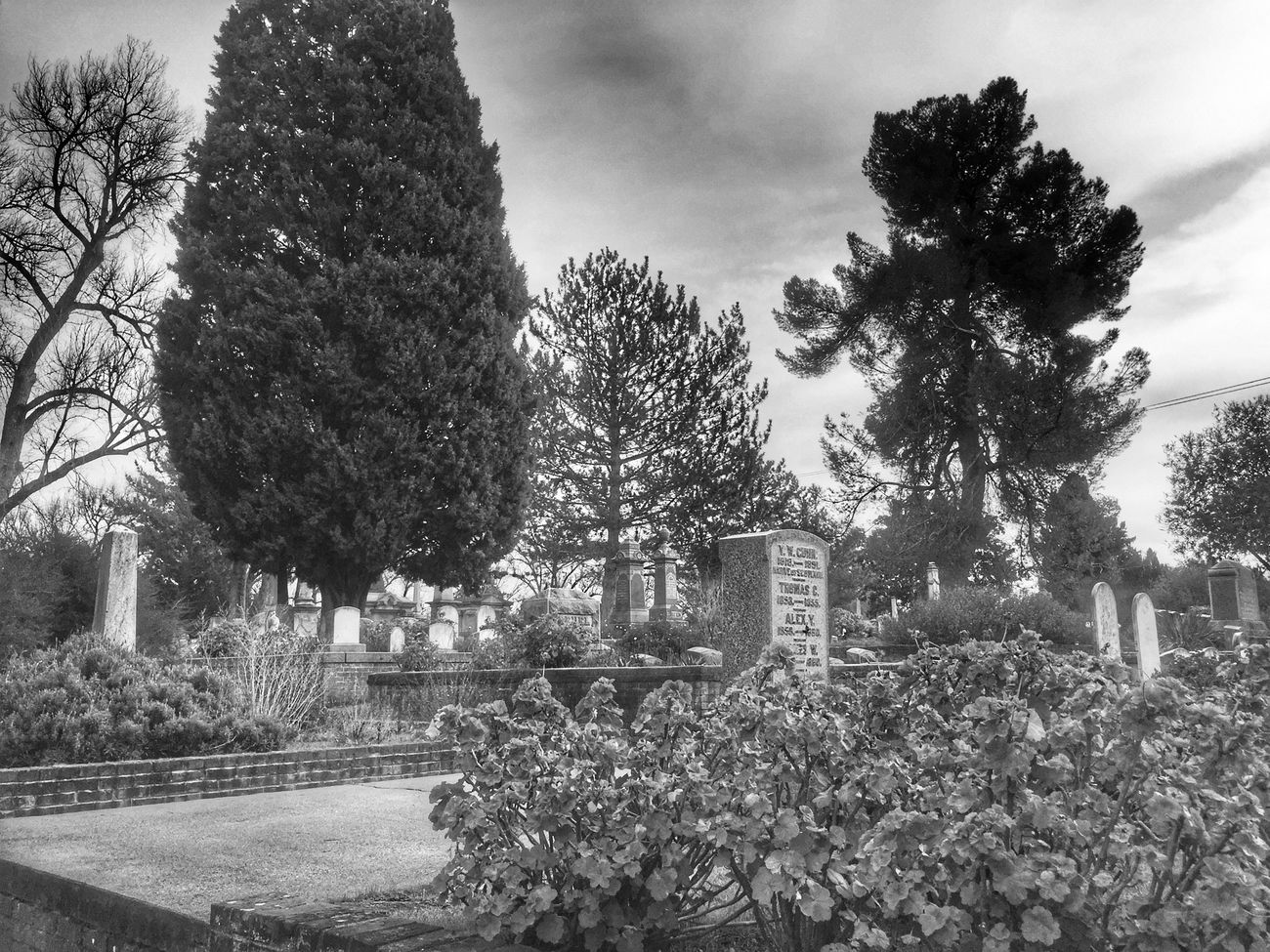 Nature Graveyard Graveyard Beauty Cemetery Monochrome Bnw_captures Blackandwhite Bnw_collection HDR