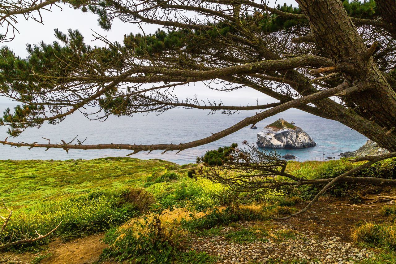 The Big Sur Adventure Series - The Promised Land: San Martin Rock 2 Tree Nature Landscape Water No People Outdoors Grass Scenics Beauty In Nature Day Cliff Tranquil Scene Big Sur Landscape_Collection Landscape_photography Seashore Landscapes Rock - Object Seascape Adventure Coastline Tree Sea Idyllic Beautiful Nature