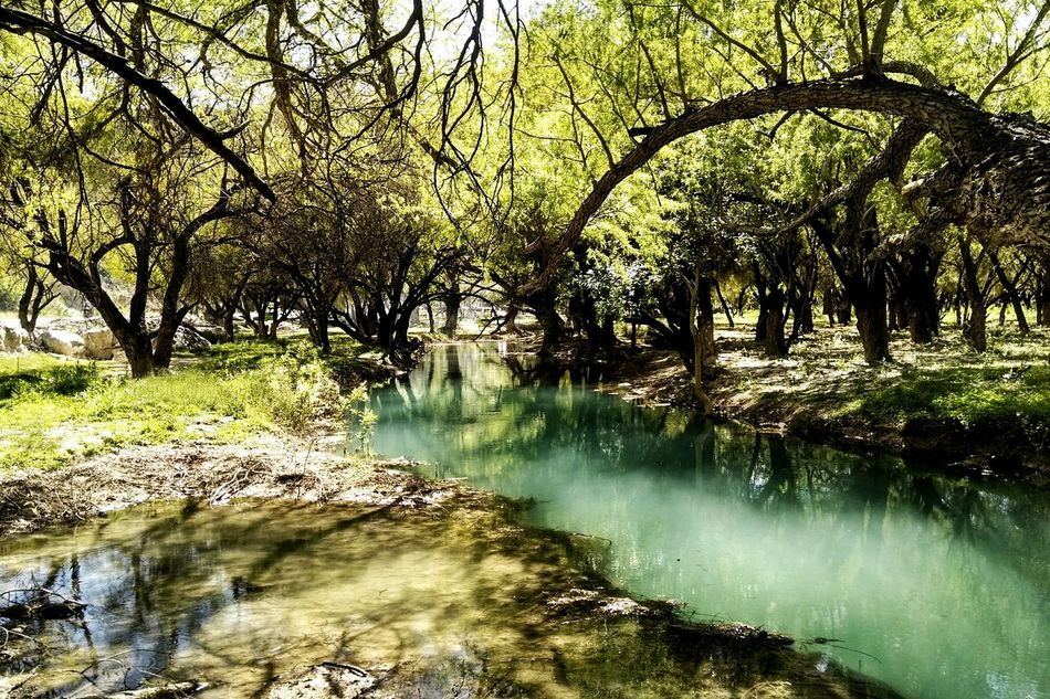 Water Tranquil Scene Tree Beauty In Nature Outdoors Taking Photos Mobile Photography Mexico Bustamante, Nl, México. Great Outdoors Outdoor Old Phone Photo Landscape Landscapes Personal Perspective Vibrant Color