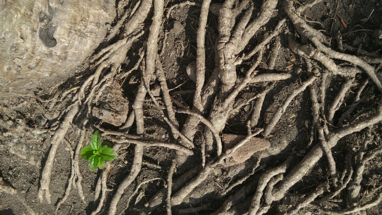 Full Frame Background Close-up Nature Textured  Tree Outdoors Beauty In Nature Brown Background Small Plants Brown Roots Roots Of Tree Roots And Branches