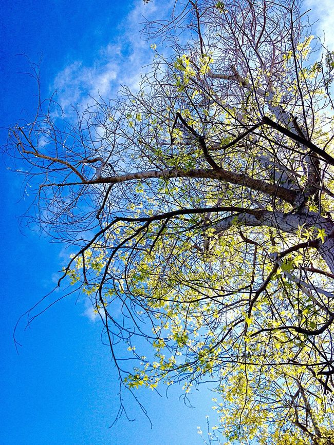 My Obsession With Trees Things I Like Tree With Yellow Leaves Tree Yellow Leaves Blue Sky Yellow Blue Blue Wave Fine Art Photography Colour Of Life