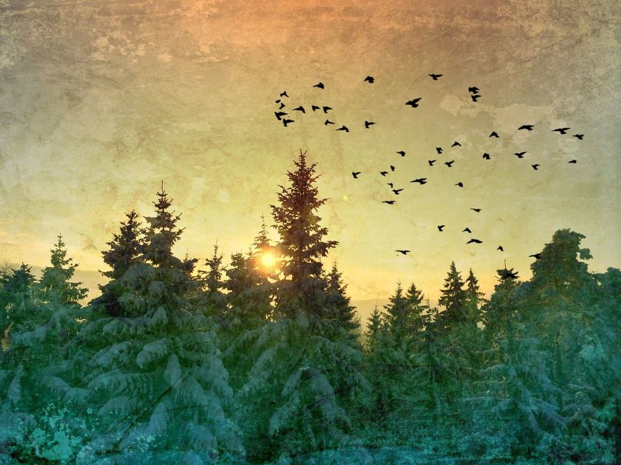 Last sunset in 2014. Birds edited with DistressedFX Landscape_Collection Nature Collection Eyem Nature Lover Streamzoofamily Sun_collection, Sky_collection, Cloudporn, Skyporn EyeEmSwiss