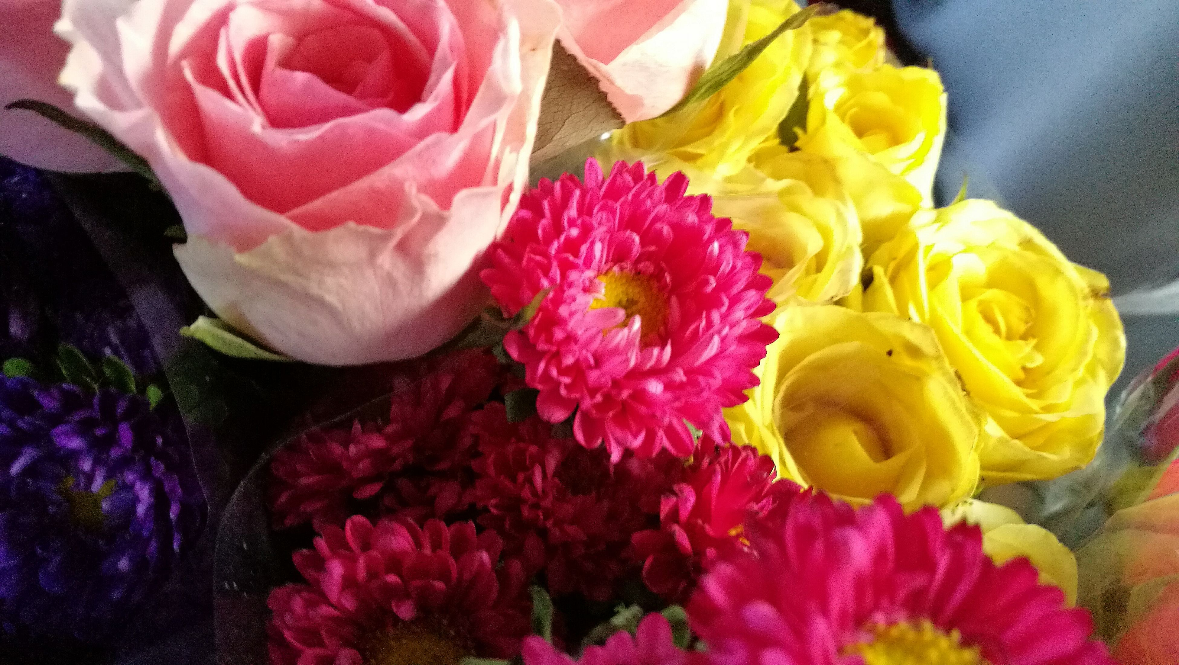 flower, multi colored, fragility, petal, variation, pink color, no people, freshness, nature, close-up, flower head, beauty in nature, indoors, day
