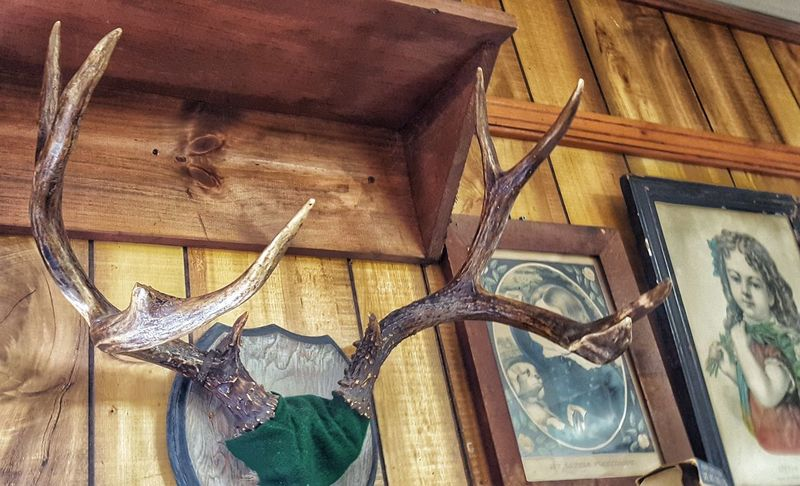 mounted antlers in a rustic diner in the Adirondacks Adirondacks Antlers Antlers On Wall Art And Craft Deer Antlers Diner Home Interior Hunting Trophy No People Obsolete Old Rustic Venison  Wood Wood - Material