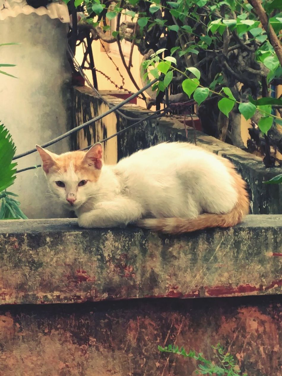 Lazy afternoon Domestic Cat Pets Nature Day Outdoors Afternoon ChillOut  Say Hello