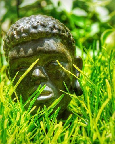 Garden Otoh¶