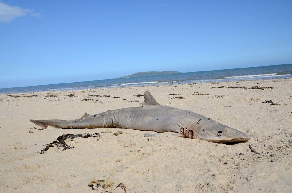Beautiful stock photos of death, Animal Themes, Beach, Blue, Calm