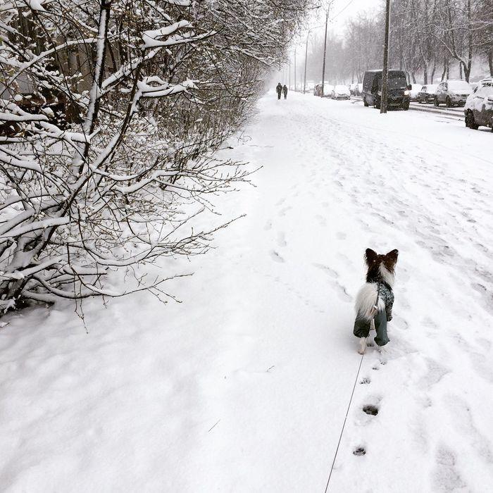 Saint Petersburg April Whereisspring Marcel Papillons Dog And Snow