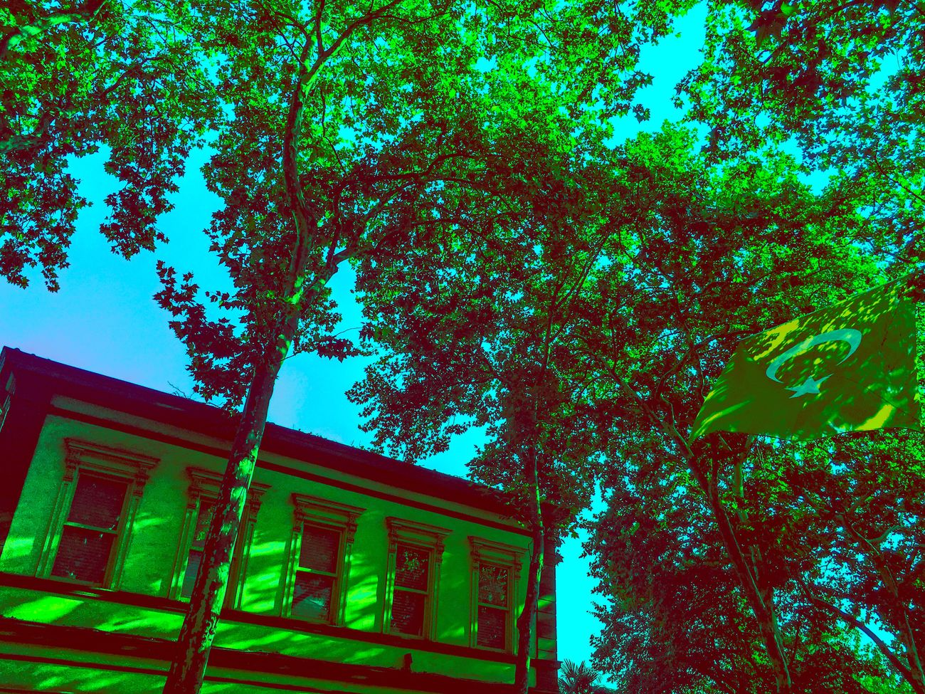 Tree Architecture Built Structure Low Angle View Building Exterior Growth Branch Tree Trunk Green Color Outdoors Day No People Sky High Section Multi Colored Vscocam First Eyeem Photo Awesome EyeEm Best Shots Türkiye Beşiktaş ❤ Green Color