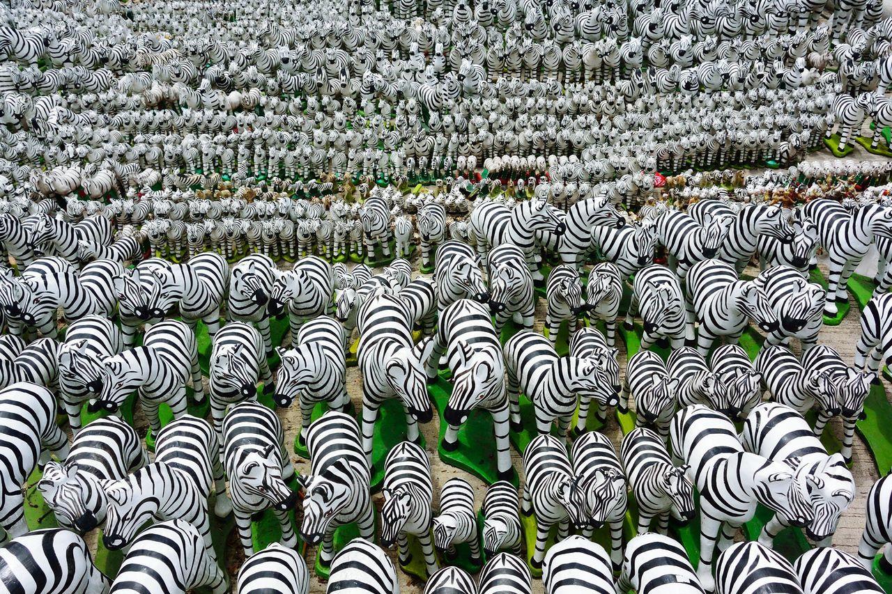 Beautiful stock photos of zebra, Abundance, Animal Representation, Art And Craft, Collection