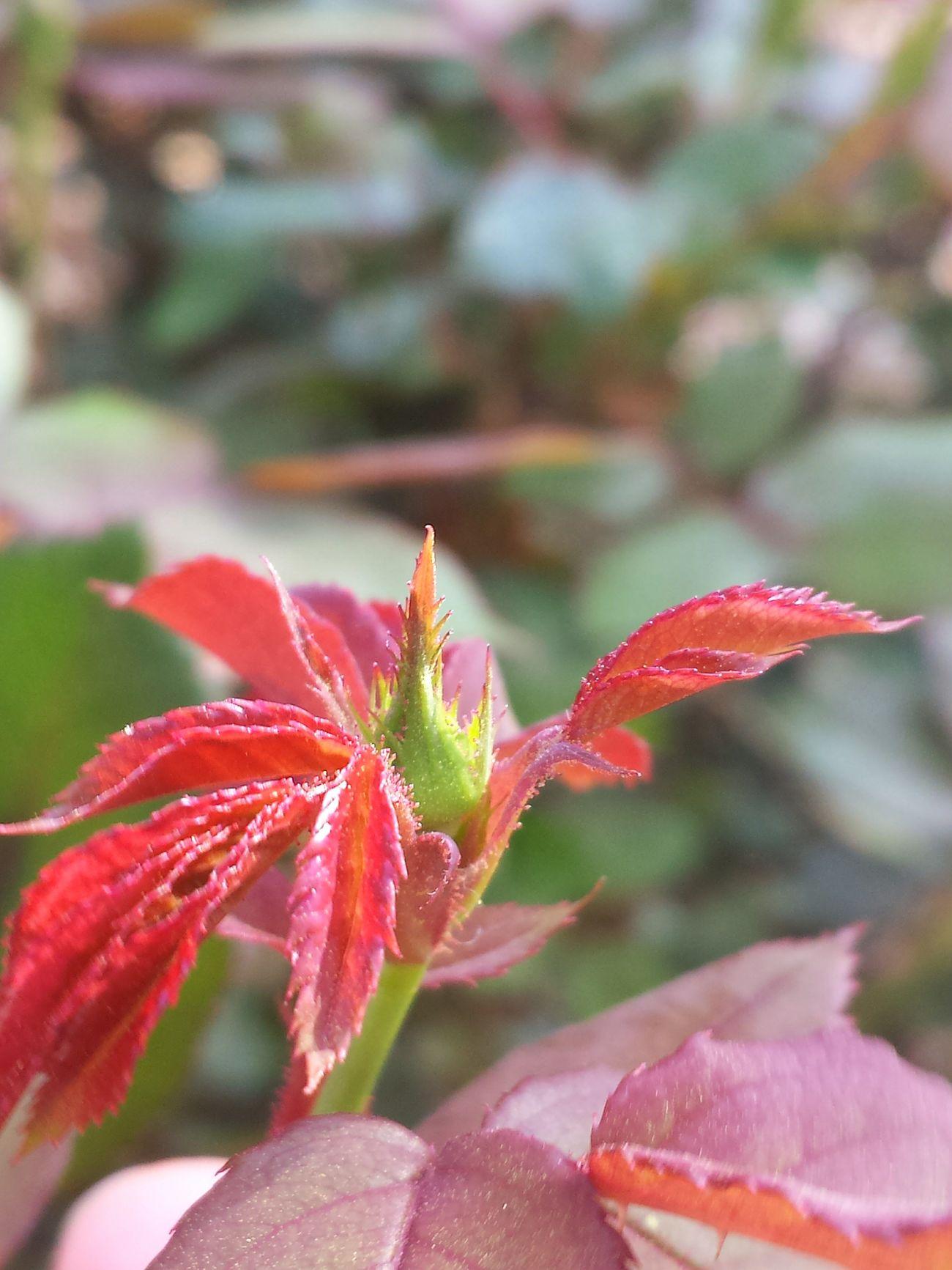 Nofilter Spring Springtime Nature Macro Closeup Closeupshot Samsung Galaxy S4