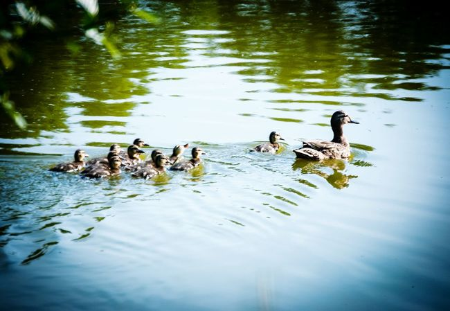 family Excursion.Bayern.Germany. Nature Photography Featured Photo EyeEm Gallery EyeEm Best Shots Photography In Motion Still Life My Bayern Eyem Gallery Motion Hello WorldBayern Feature Thinks I Like Beliebte Fotos Bayern Germany Blu Water Alternative Fitness Animals Of Eyeem My Favorite Photo Animals