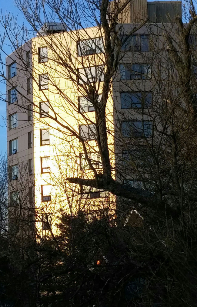 Architecture Bare Tree Branch Building Exterior Built Structure City Day House Magic Light Majic Moment. Nature No Filter, No Edit, Just Photography No People Outdoors Reflections And Shadows Sky Sunlight Tree Winter