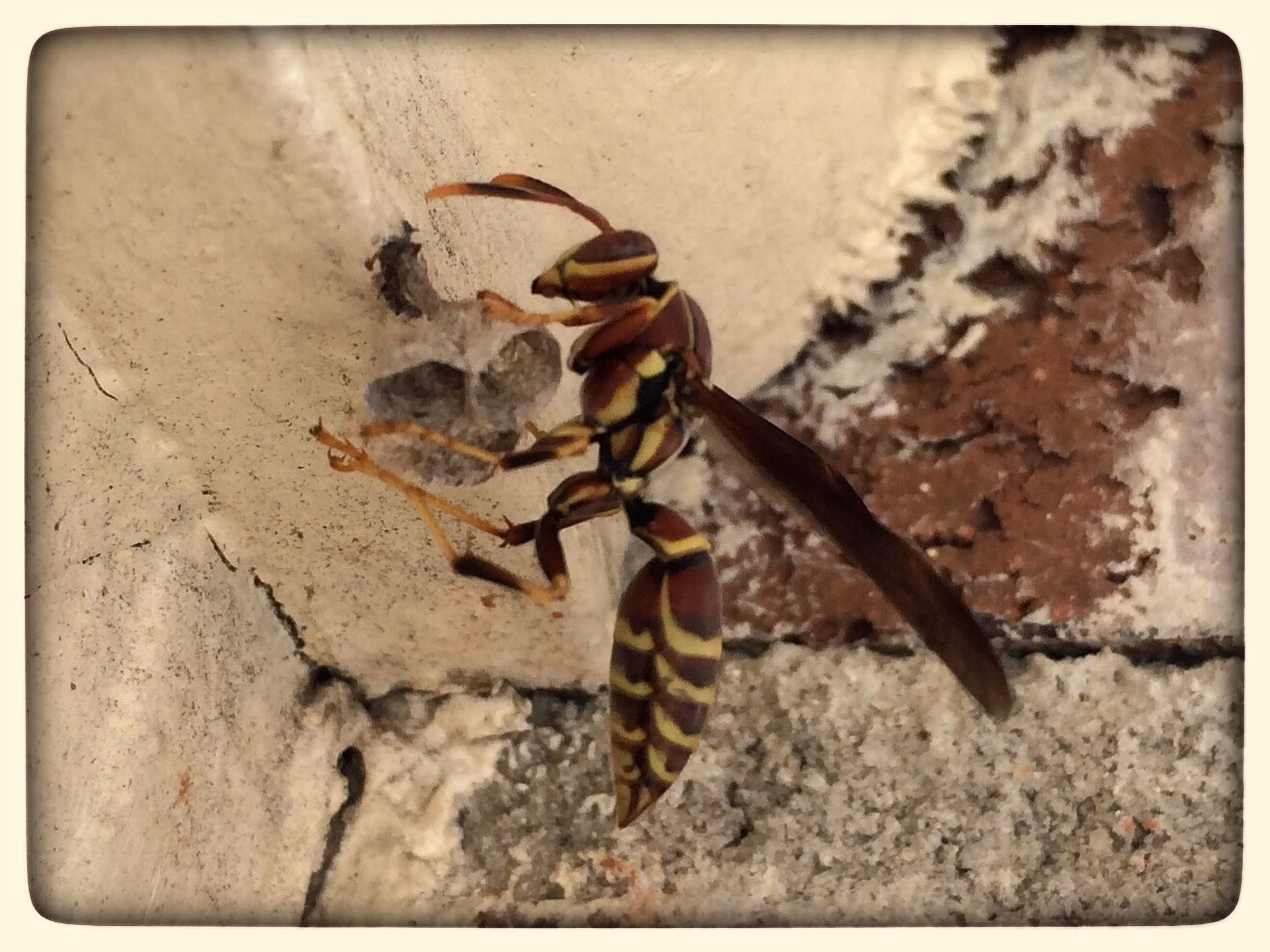 transfer print, auto post production filter, animal themes, one animal, animals in the wild, wildlife, insect, close-up, high angle view, outdoors, rock - object, day, abandoned, damaged, obsolete, dead animal, no people, sunlight, full length, rusty