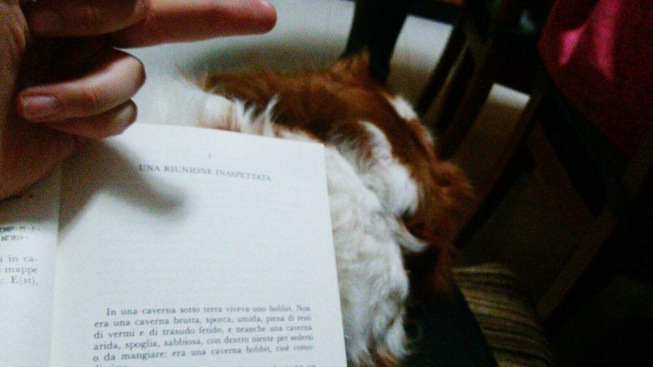 ♡♡♡ Mydog♡ TheHobbit Followme Tolkienfanatic Relax Books Italiangirl