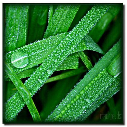 Water Nature Green Hello World Dropsoflife Greenthumb