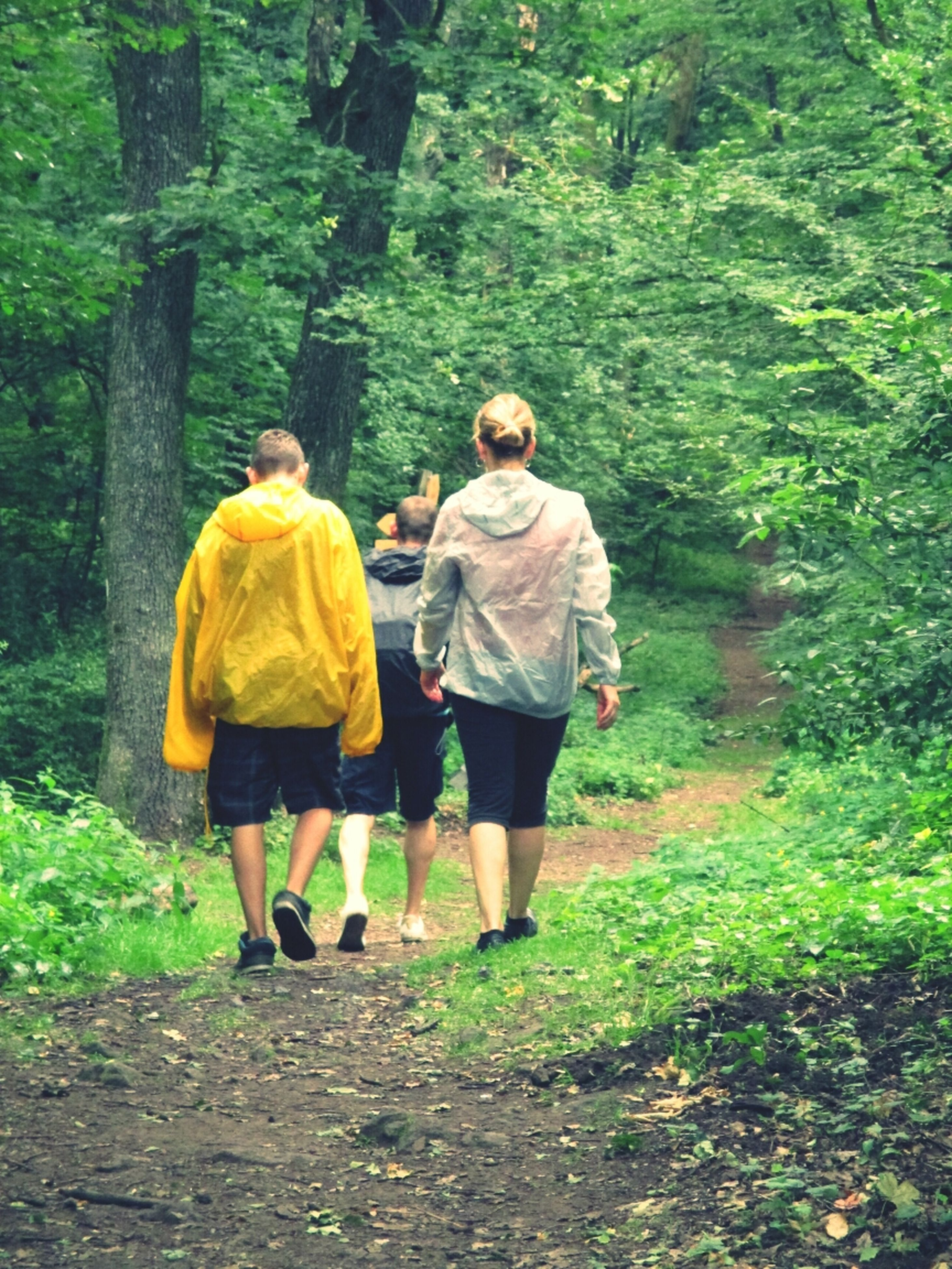 full length, lifestyles, rear view, leisure activity, togetherness, casual clothing, bonding, walking, tree, men, person, love, boys, family, growth, green color, friendship, nature