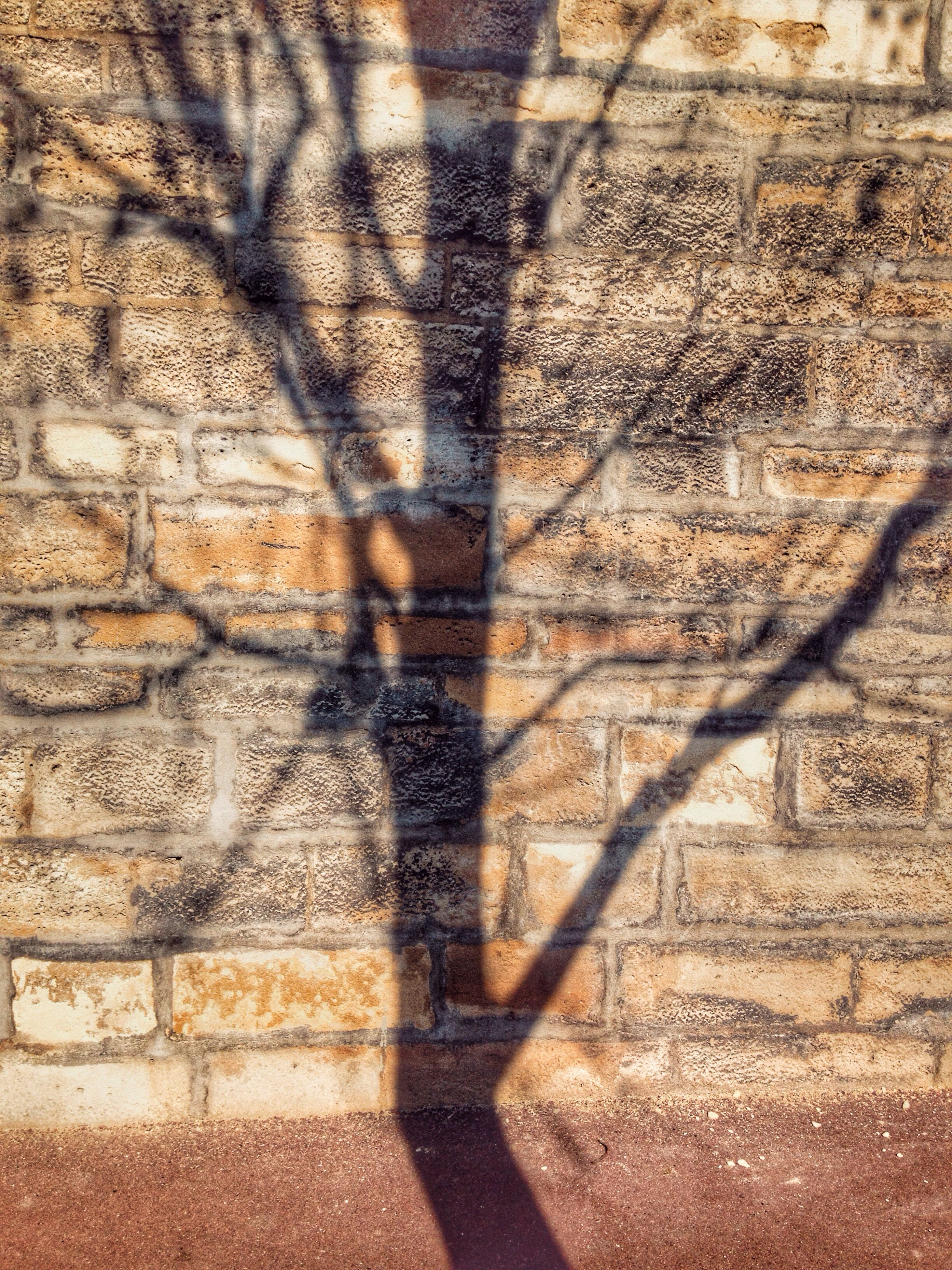 shadow, sunlight, wall - building feature, focus on shadow, high angle view, day, outdoors, footpath, textured, street, pattern, cobblestone, no people, sidewalk, nature, wall, built structure, tree, paving stone