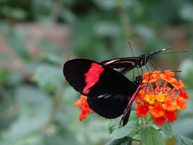 Animal Themes Animal Wildlife Animals In The Wild Beauty In Nature Butterfly - Insect Close-up Day Flower Flower Head Focus On Foreground Fragility Freshness Insect Nature No People One Animal Outdoors Plant Pollination
