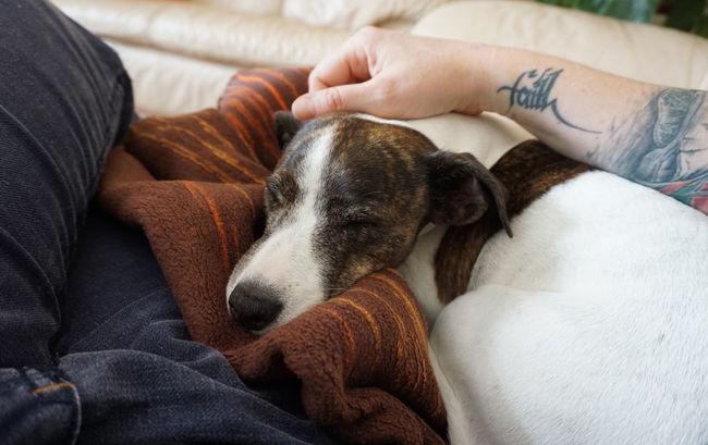 Cuddle Cuddlebuddy Dog Friends Friendship Relaxing Resting Sleeping