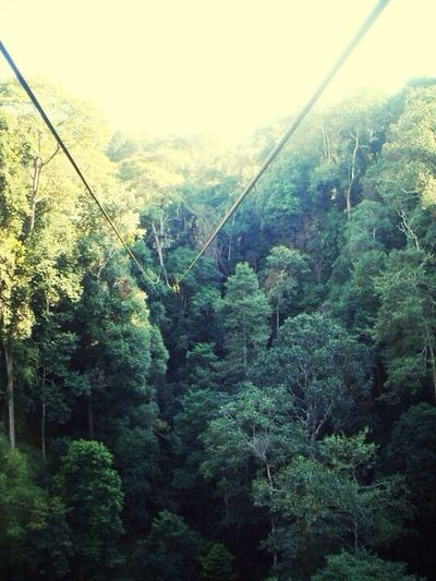 High wire climbing Climbing Forest Nature_collection Landscape_Collection in thailand
