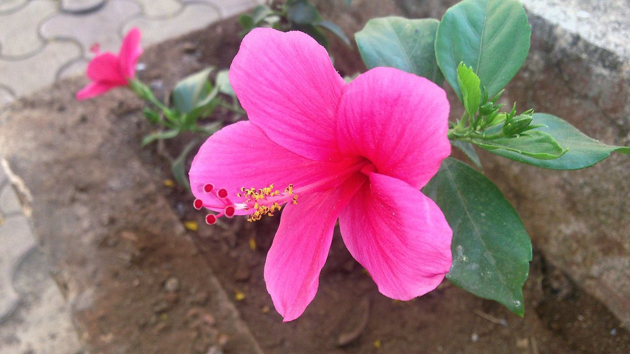 Flower Power Nothing Better Beauty Of Nature